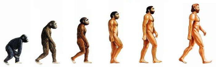 evolution-homme-singe-vegetarisme