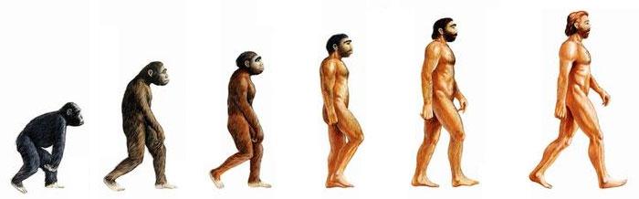 evolution-homme-singe-vegetarisme